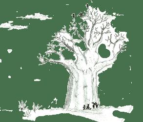 Arbre baobab ©Arnaud Bouvard