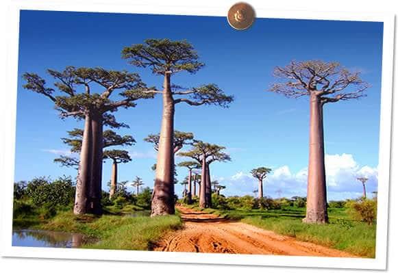 Programme de reforestation au Niger et à Madagascar