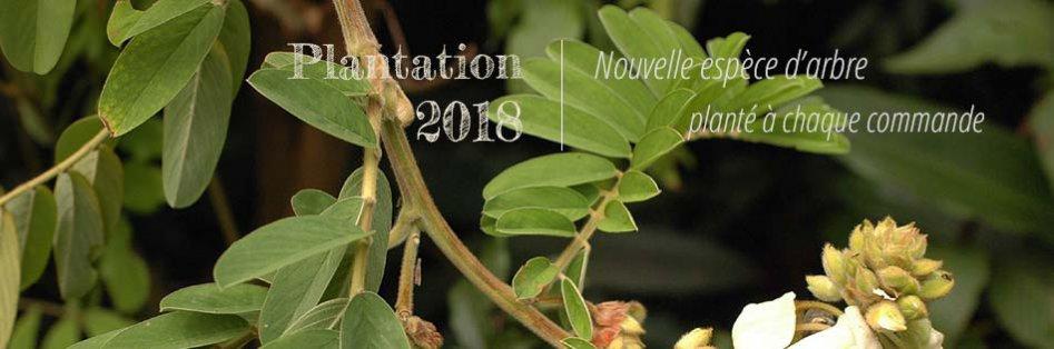 Cartes écologiques nouveaux arbres plantés