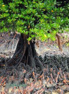 Plantation 2020 - Cerop Tagal